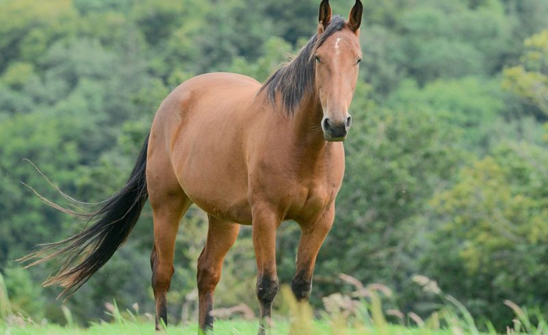Equine ID Legislation