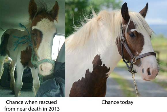 1Chance-before-after