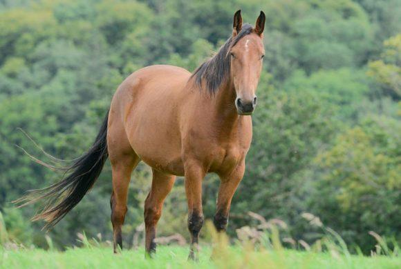 Equine ID Legislation