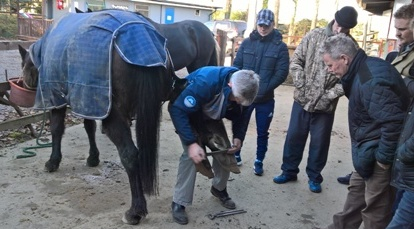 Equine Hoof Care Course with horse owners from Athy