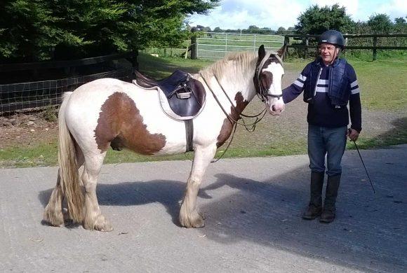 Feeding the Leisure Horse or Pony