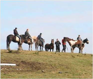 Round up of horses from Dunsink landfill