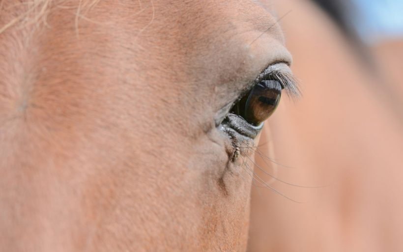 Managing horses in hot weather