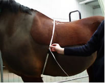 Working out your horse's weight