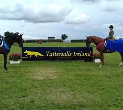 IHIHWT Thoroughbred Club Show Series Qualifier for retired racehorse 2017