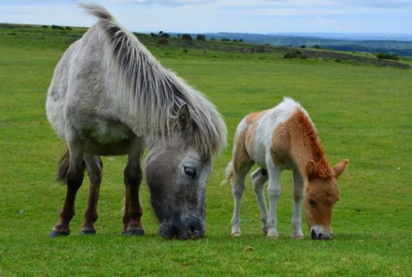 Your Complete Guide to Common Equine Parasites